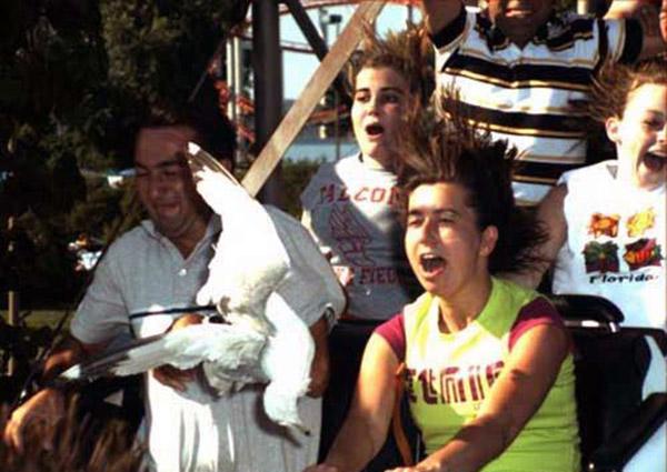 funny amusement park ride photos