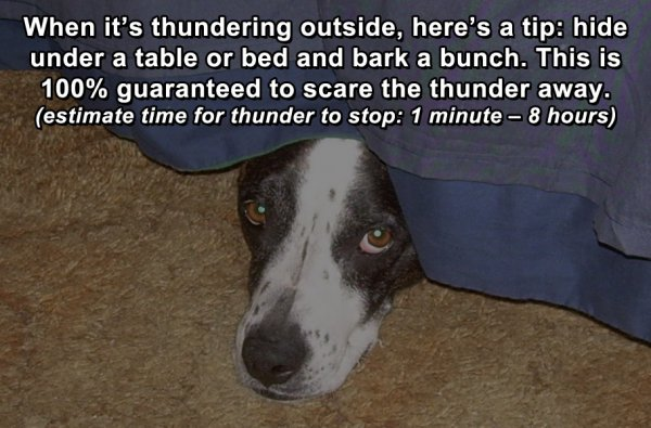 dog life hacks
