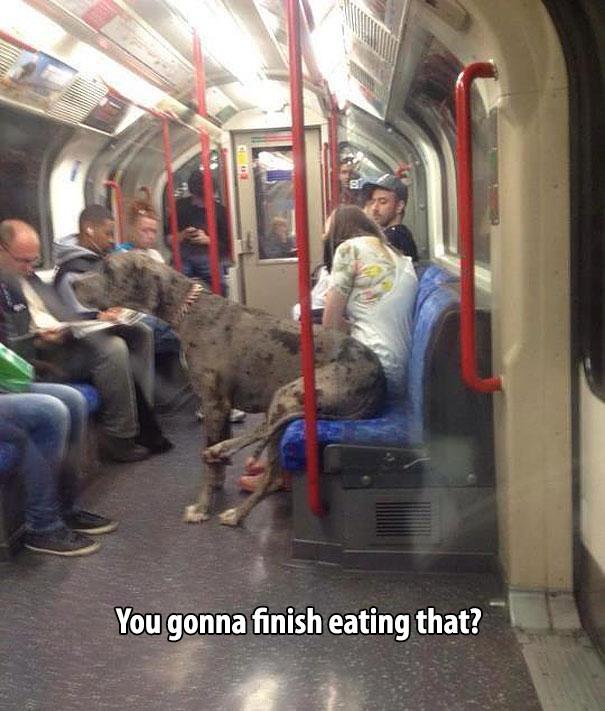 animals being human