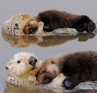 baby otter sleep