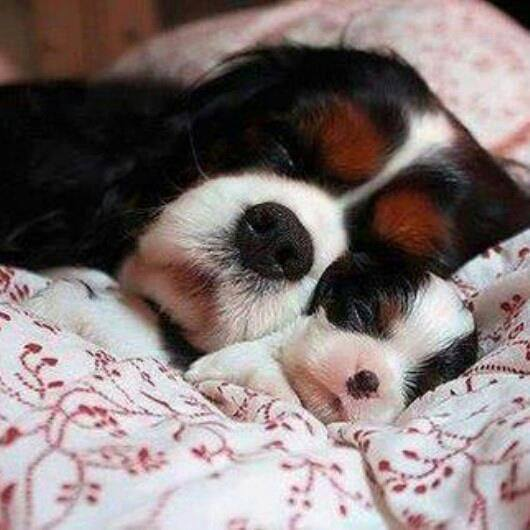 cute dogs mom and baby