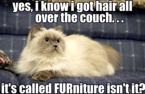 Funny Cat Memes Clean : Meme furniture