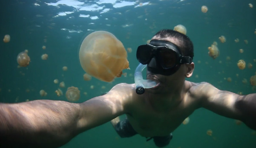 swimming with jelly fish