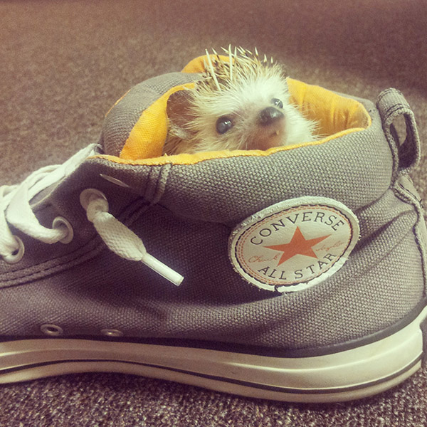 cute animals in shoes