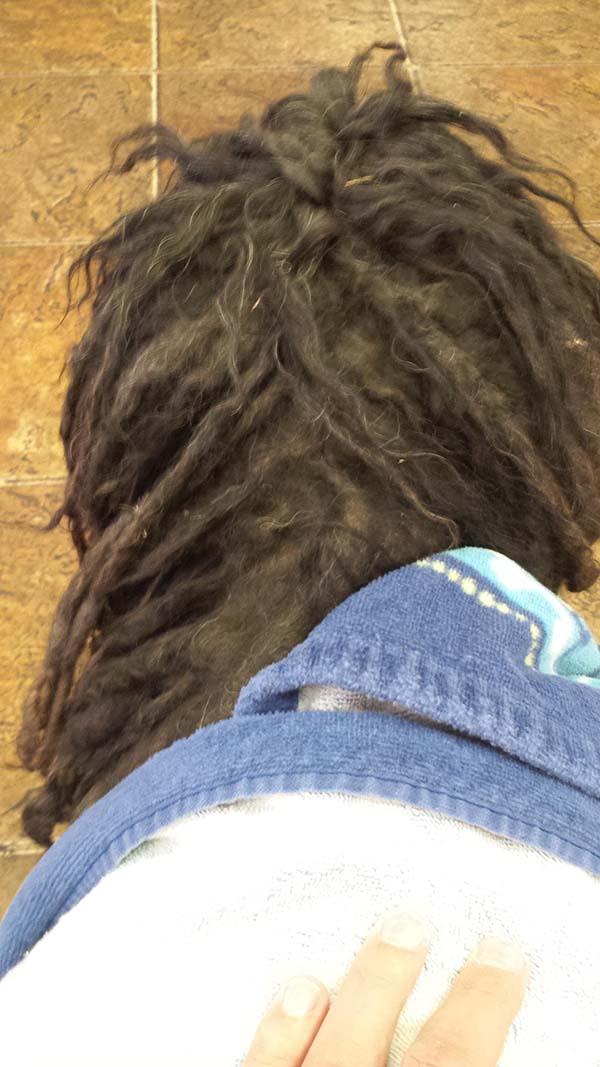 dog dreadlocks