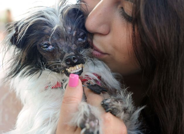 There S A New Winner Of The World S Ugliest Dog Contest