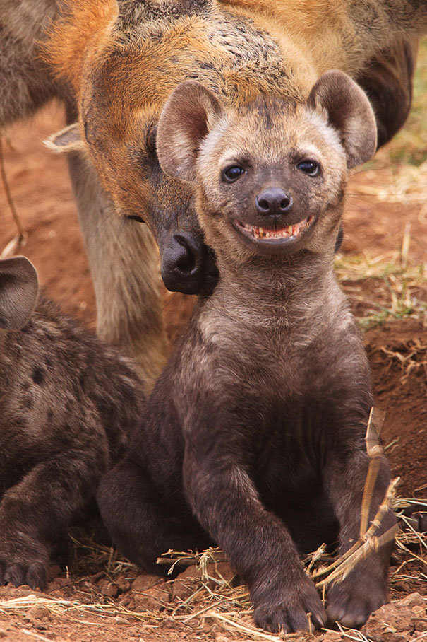 The 28 Happiest Animals In The World