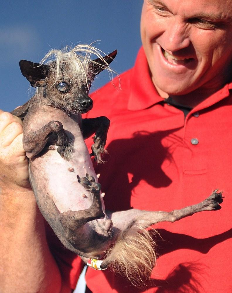 worlds ugliest dog contest 2014