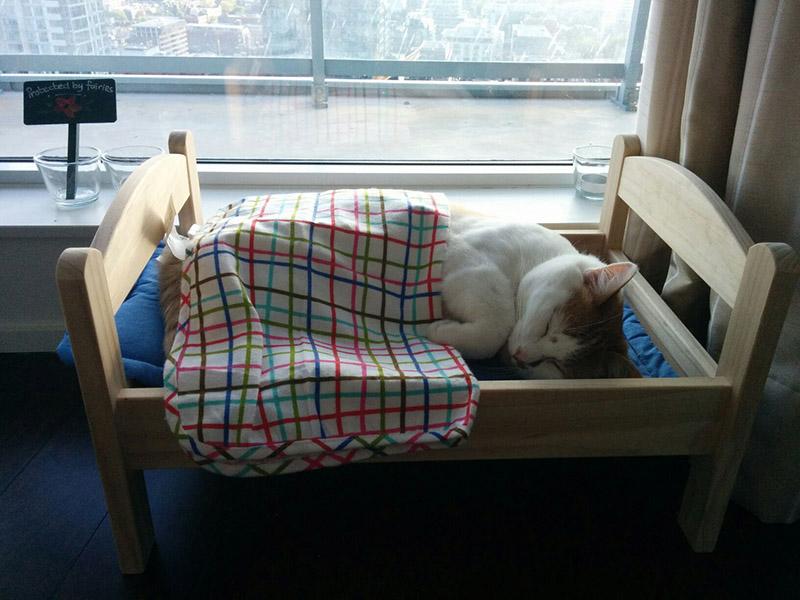 cat bed ikea