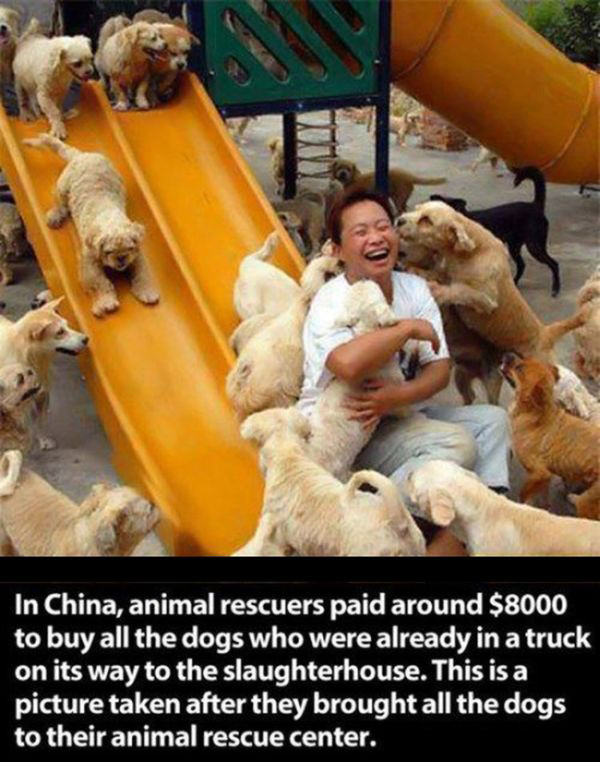 people going above and beyond for animals
