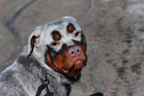 unique dog coats