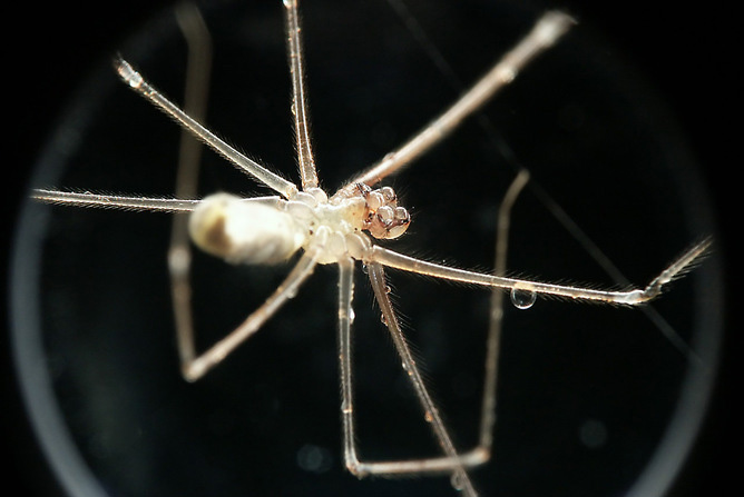 why people fear spiders