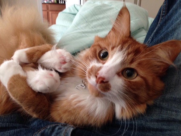 cat holds his own feet