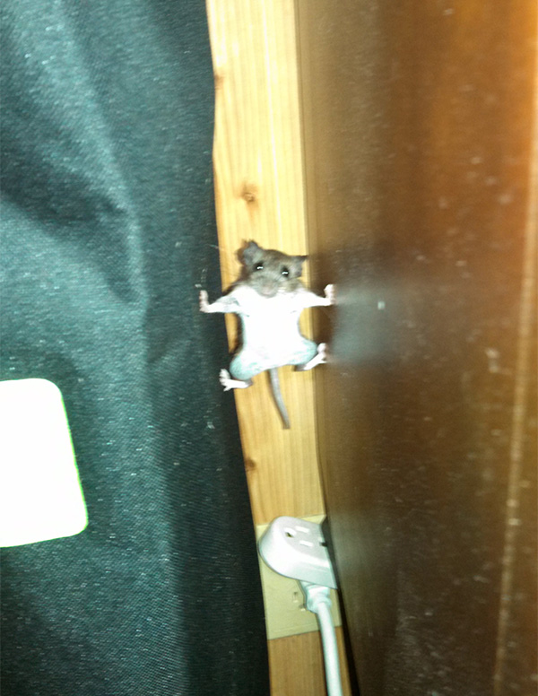 mouse goes mission impossible