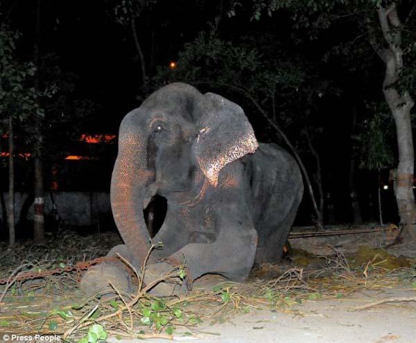 abused elephant 50 years saved