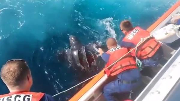 Coast Guard Saves Sea Turtle