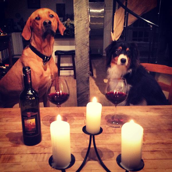 dog anniversary dinner wine