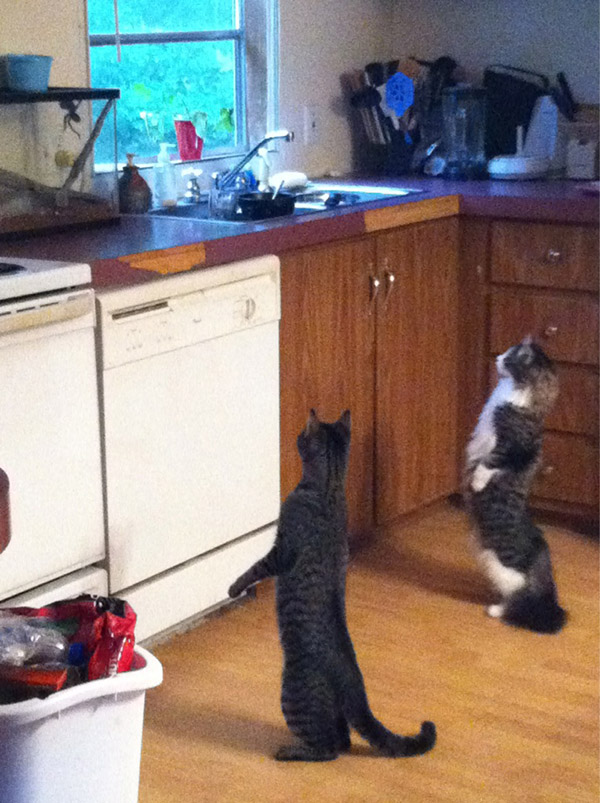 cats standing up