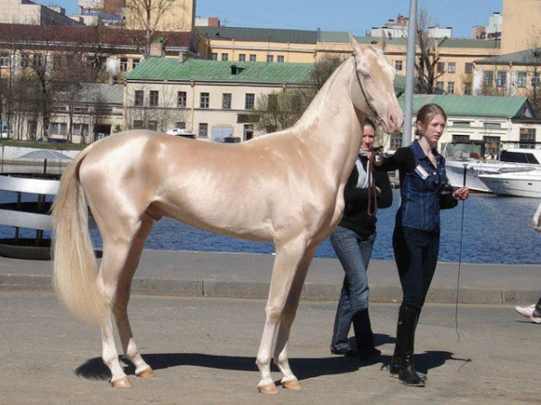 unique horse breeds