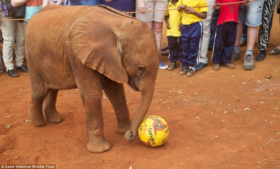 baby elephant rescue