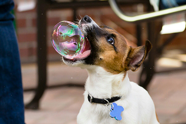 dog bubble