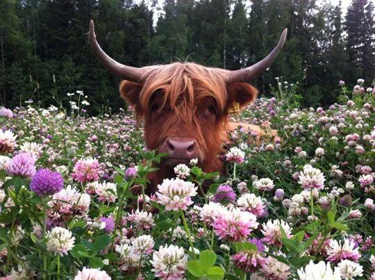 beautiful animals in flowers