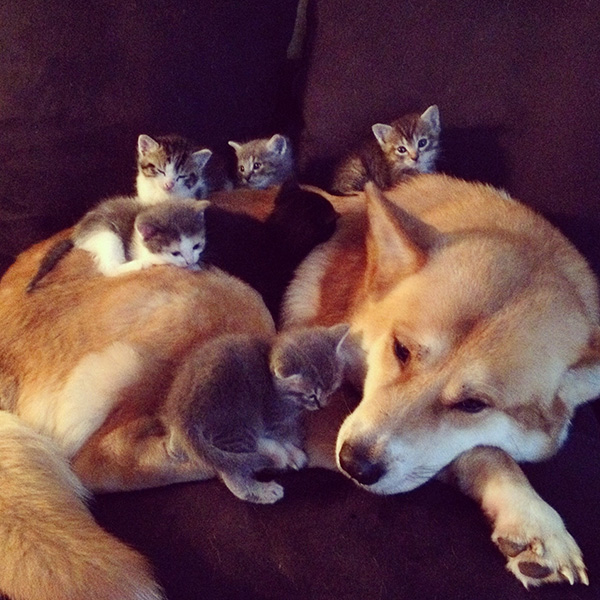 kittens laying on dog