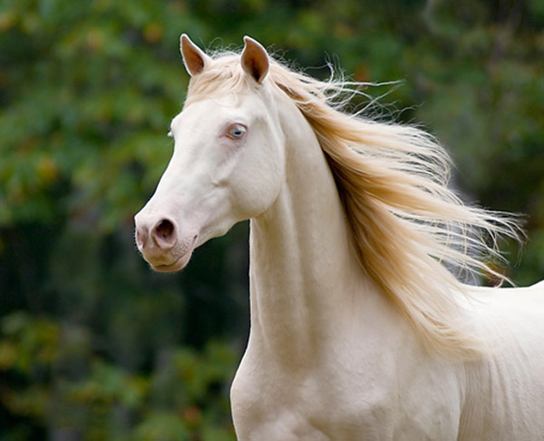 unique horse breeds