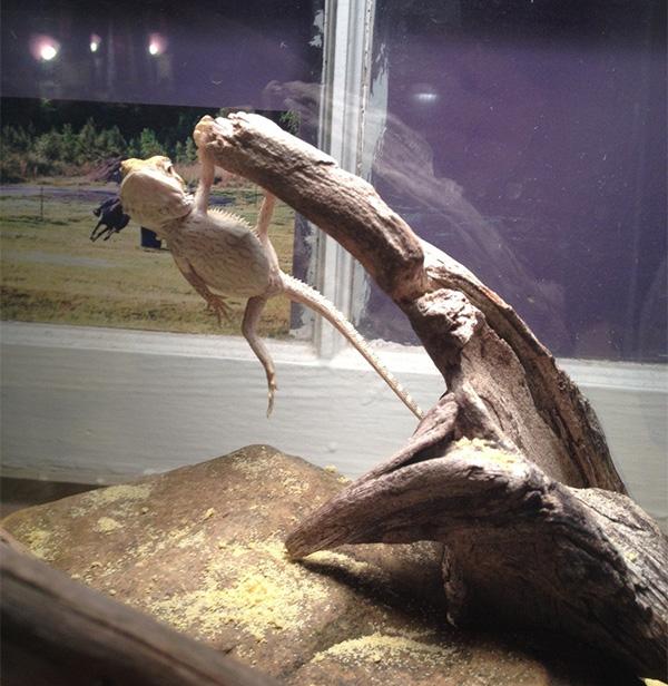dragon hanging