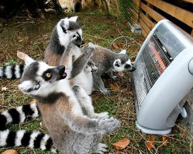 animals in front of heater