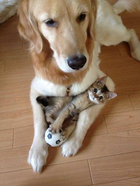 dog with kitten in paws