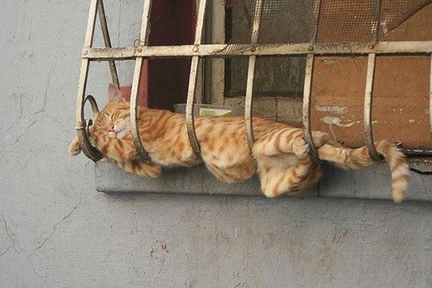 cats have no bones