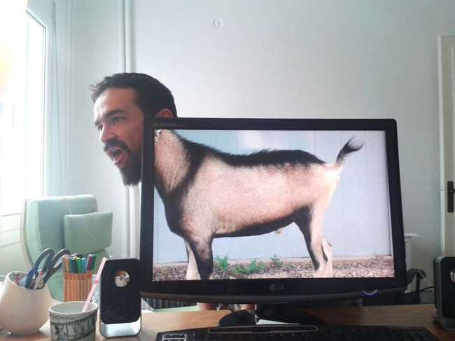 funny office safari pictures