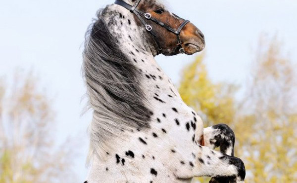 The 8 Most Beautiful And Rare Horses In The World