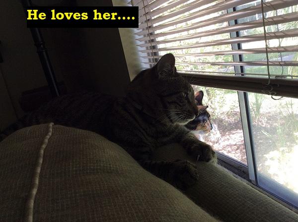 cat love story