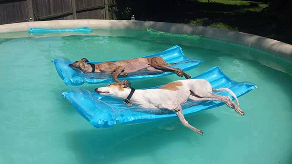 dogs on pool rafts