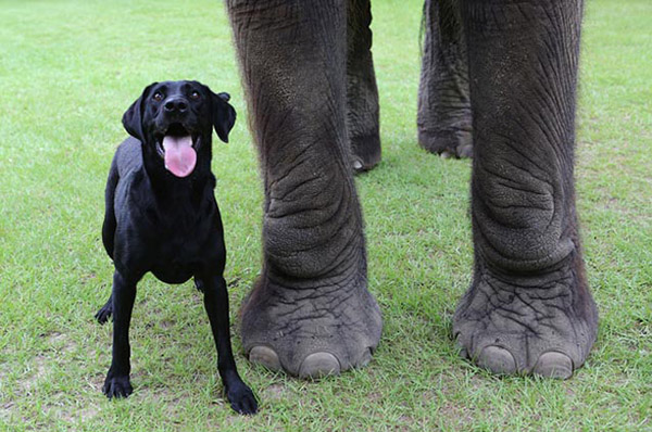 dog elephant best friends