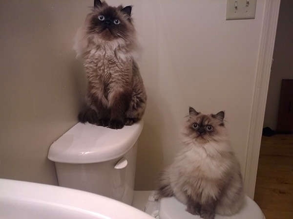 cats when i get out of shower