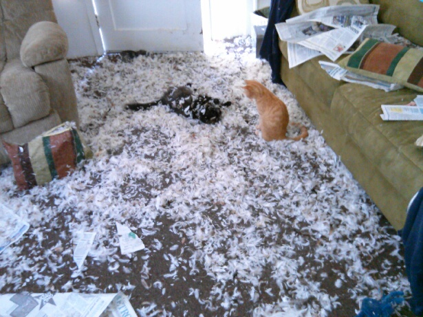 cats shred up living room