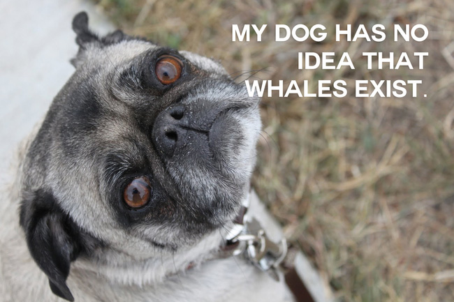 funny animal thoughts