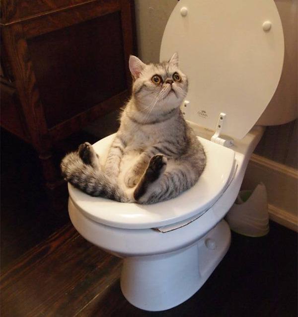 cat pooping on toilet