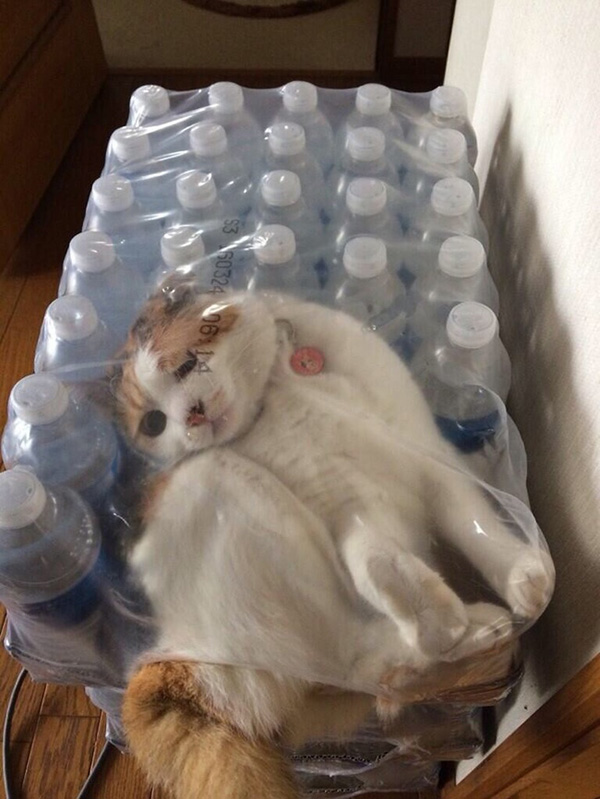 cats stuck in things