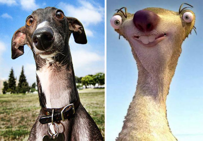 Dinosaurs Era 15 Dogs That Look Exac...
