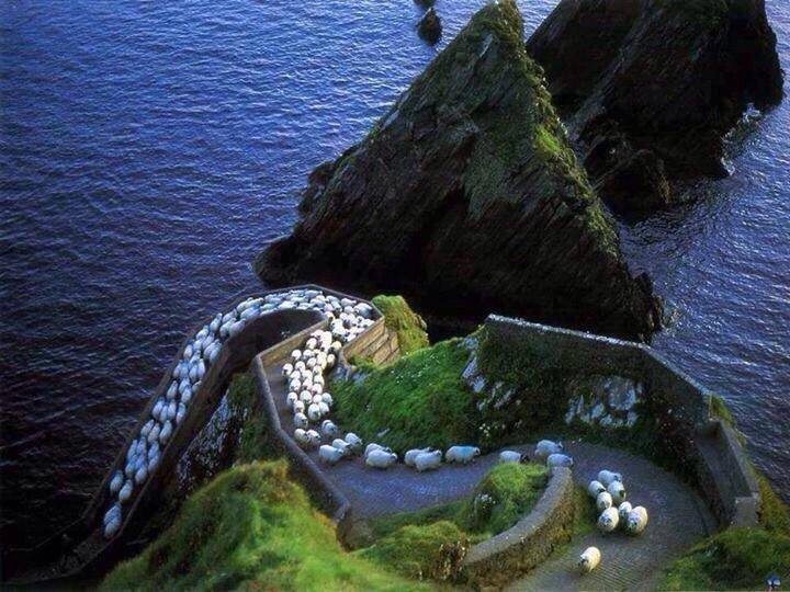 sheep highway ireland