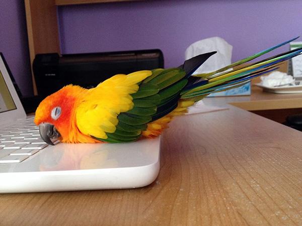 bird sleeps on computer