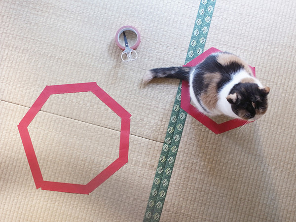 how to catch a cat