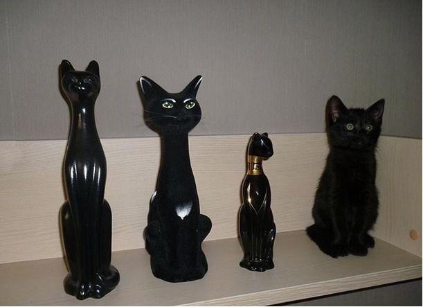 black cat diguised