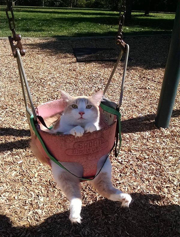 cat in a swing