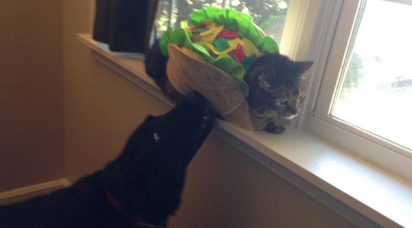 dog trying to eat cat taco
