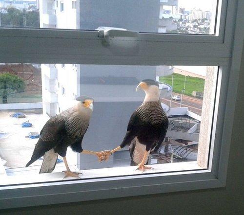 birds holding feet